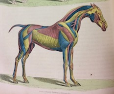 Equine History Collective