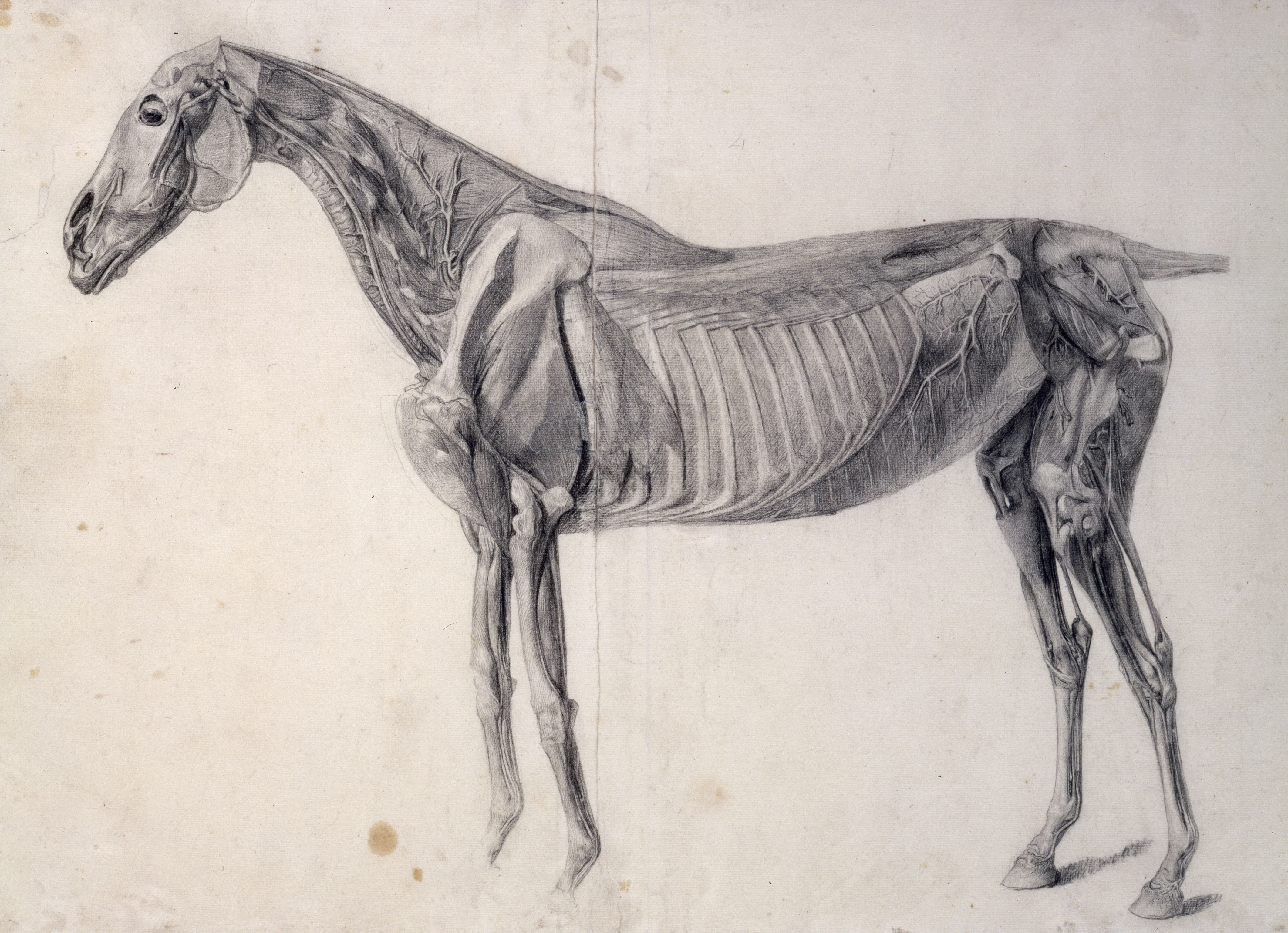 "Upcoming Exhibit: George Stubbs ""all done from nature"" (UK)"